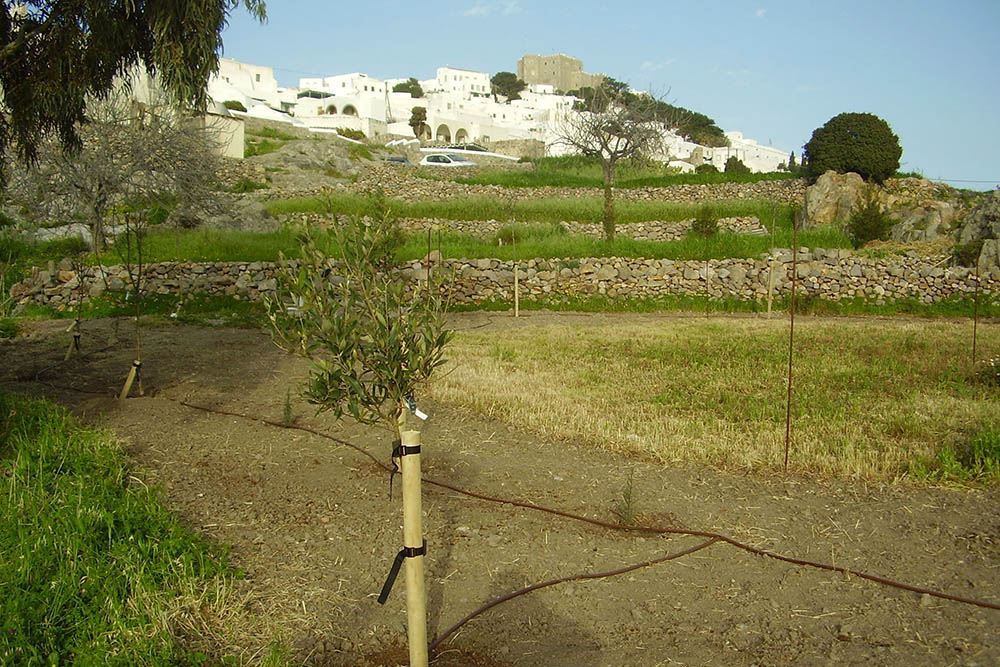 Patmos land restoration