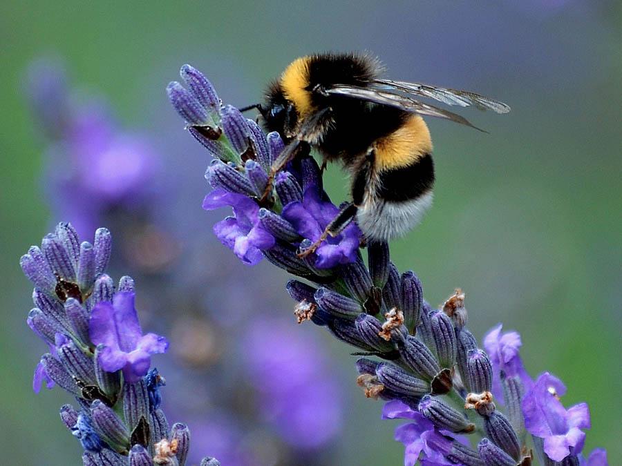 προστασία της βιοποικιλότητας