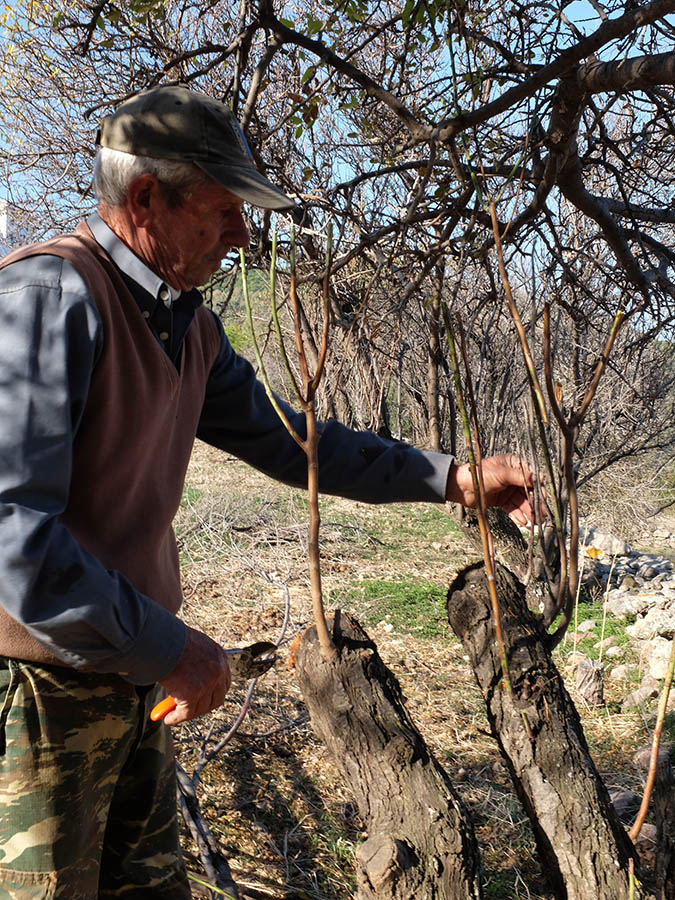 κλάδεμα & εμβολιασμός δένδρων