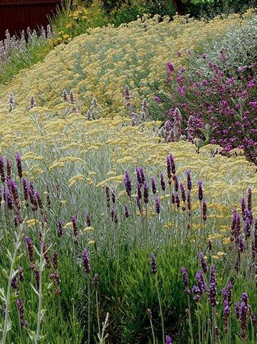 άνυδροι κήποι (ξηροκαλλιέργειες)